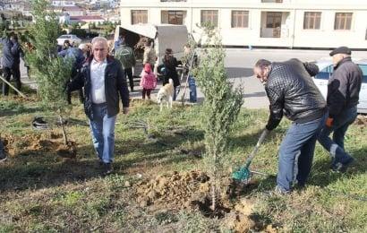 """""""Jurnalistlər binası""""nda ağacəkmə aksiyası"""