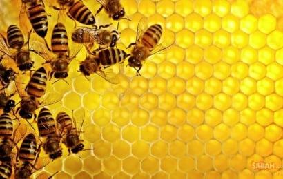 Arı südü: Bir damcısı kifayətdir