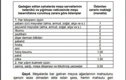 Azərbaycanda meşələrdən meyvə yığmaq qadağan edildi – CƏRİMƏLƏR