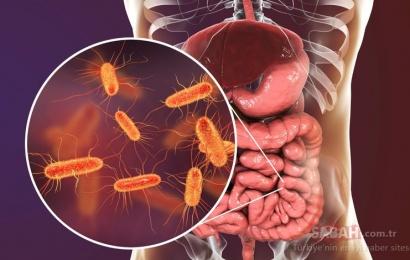 Bağırsaqlardakı mikrobları məhv edən qidalar