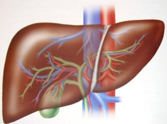 Qara ciyəri sağlam saxlamağın təbii yolları