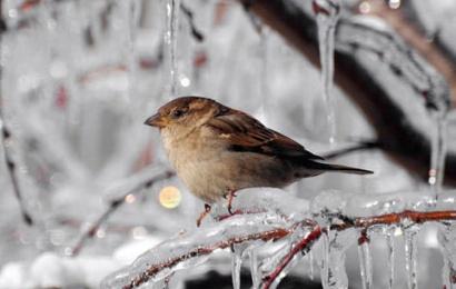 Sabah hava şaxtalı olacaq, yollar buz bağlayacaq – PROQNOZ