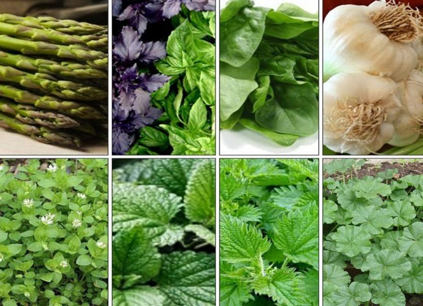 Yazda orqanizmi gücləndirən bitkilər – RESEPT